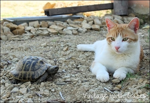 Barney and Turtle