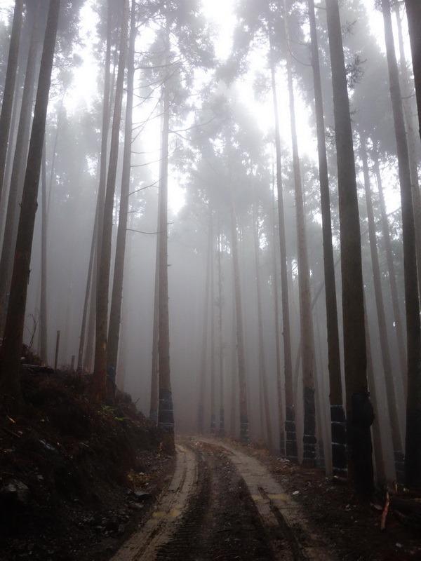 2013_1126-1129 鹿林山-1_127