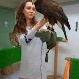 pamela with a giant falcon at Owl Cafe in Harajuku in Harajuku, Tokyo, Japan