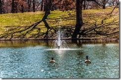 Fountain Ducks-1