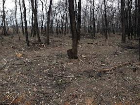 лес12.jpg