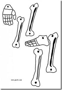 esqueleto 5 (3)