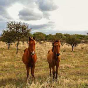horses2-2.jpg