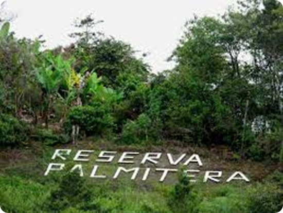 reserva palmitera