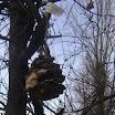 Еколошка акција [26.12.2011.]