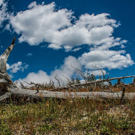 Fallen Tree in Yellowstone National Park by Dave Rich - Landscapes Prairies, Meadows & Fields