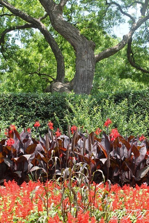 Dallas Arboretum 072