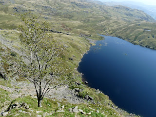 Tree with Stickle Tarn from Jacks Rake