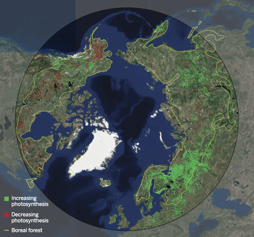 Map of the Northern Hemisphere, showing boreal forest boundaries and areas of changing photosynthesis. Graphic: Scott Goetz / Woods Hole Research Center