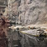 Carolina Aquarium - 06072013 - 14