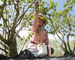 Gloria Olguin picks ripened blueberries at Patty's Patch Blueberry U-Pick near Labelle.