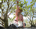 Gloria Olguin picks ripened blueberries at Patty's Patch Blueberry U-Pick near Labelle.