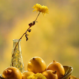 Yellow by Mary Drh - Nature Up Close Gardens & Produce (  )