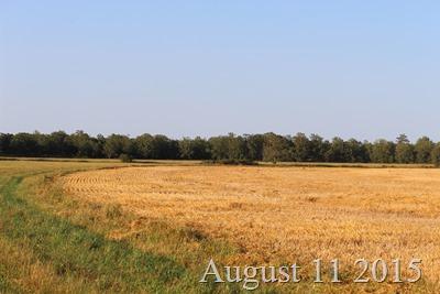 August 11 Field