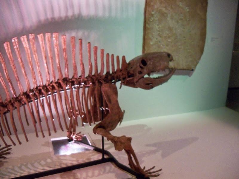 Houston Museum of Natural Science - 116_2697.JPG