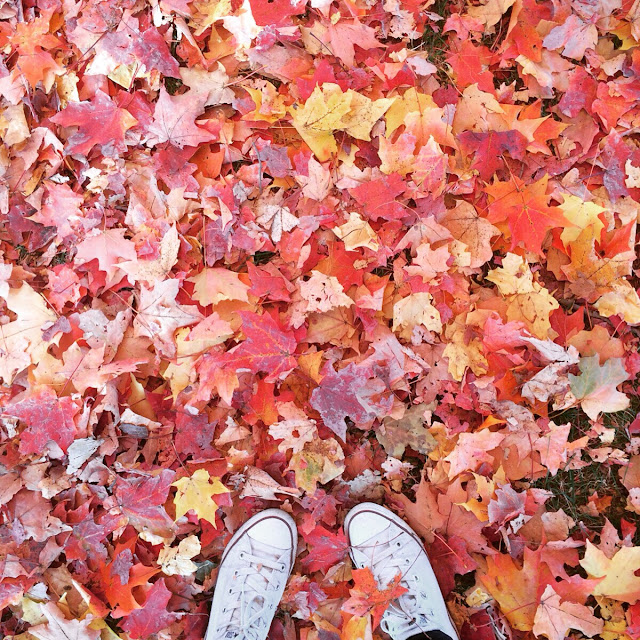 Fall leaves and Converse kicks