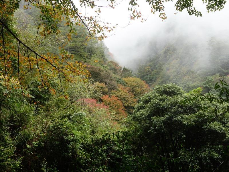 2013_1126-1129 鹿林山-1_192