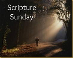 Scripture Sunday