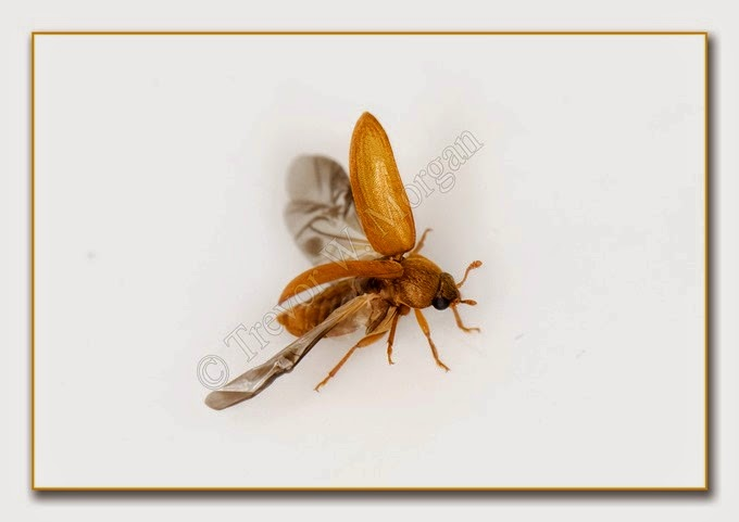 Bug 11 Rasp B
