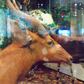 Houston Museum of Natural Science - 116_2777.JPG