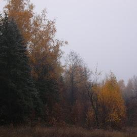 Есен by Georgi Kolev - Novices Only Landscapes ( цветове., есен., мъгла., време., дървета. )