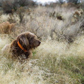 Gracie by Earl Heister - Animals - Dogs Portraits ( dogs, dog in nature, dogs in nature, gracie, dog,  )