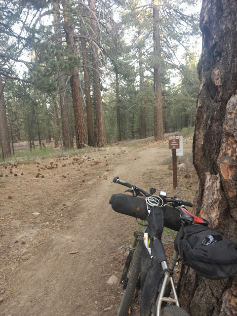 Fun single track that took me back down Mt Pinos.