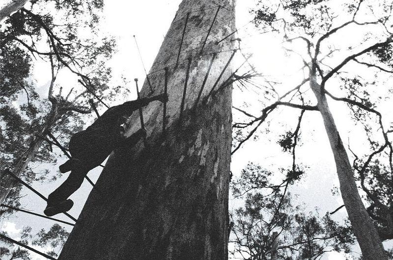 dave-evans-bicentennial-tree-2