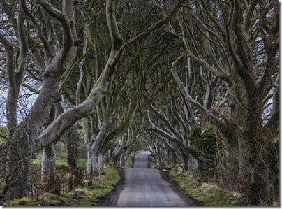 02.Camino Dark Hedges