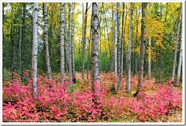 150911_AlaskaBG_forest_tapestry