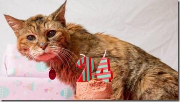 La cura del gatto anziano