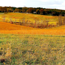 The  gentle rolling hills. by Peter DiMarco - Landscapes Prairies, Meadows & Fields ( peaceful, meadows, relaxation, landscape, fields )