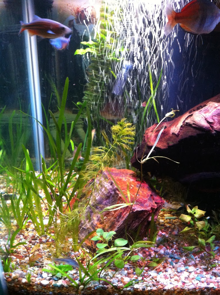 Cell phone pictures of my 75 gallon tank IMAGE_6FA3C152-288C-4396-A3EA-746A3372E6ED