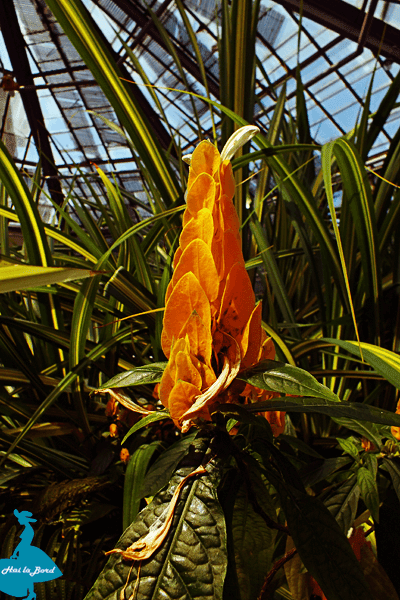 floare gradina botanica cluj