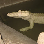 Our Airboat Adventure ride in New Orleans to see the swamps and gators 07242012-07