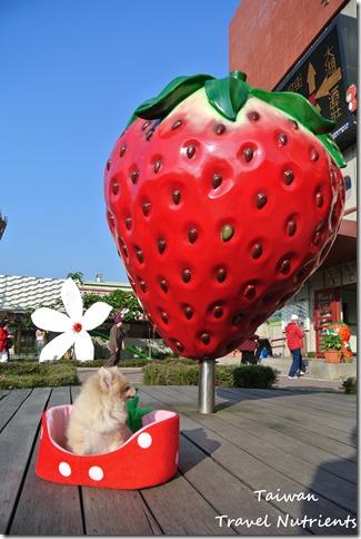 大湖草莓 (4)