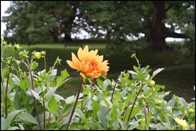 The Gardens Of Eltham Palace (5)
