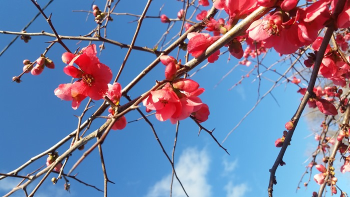 virtù - blossoms