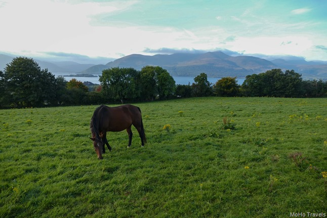 01 Killarney to Bunratty (1 of 1)-2
