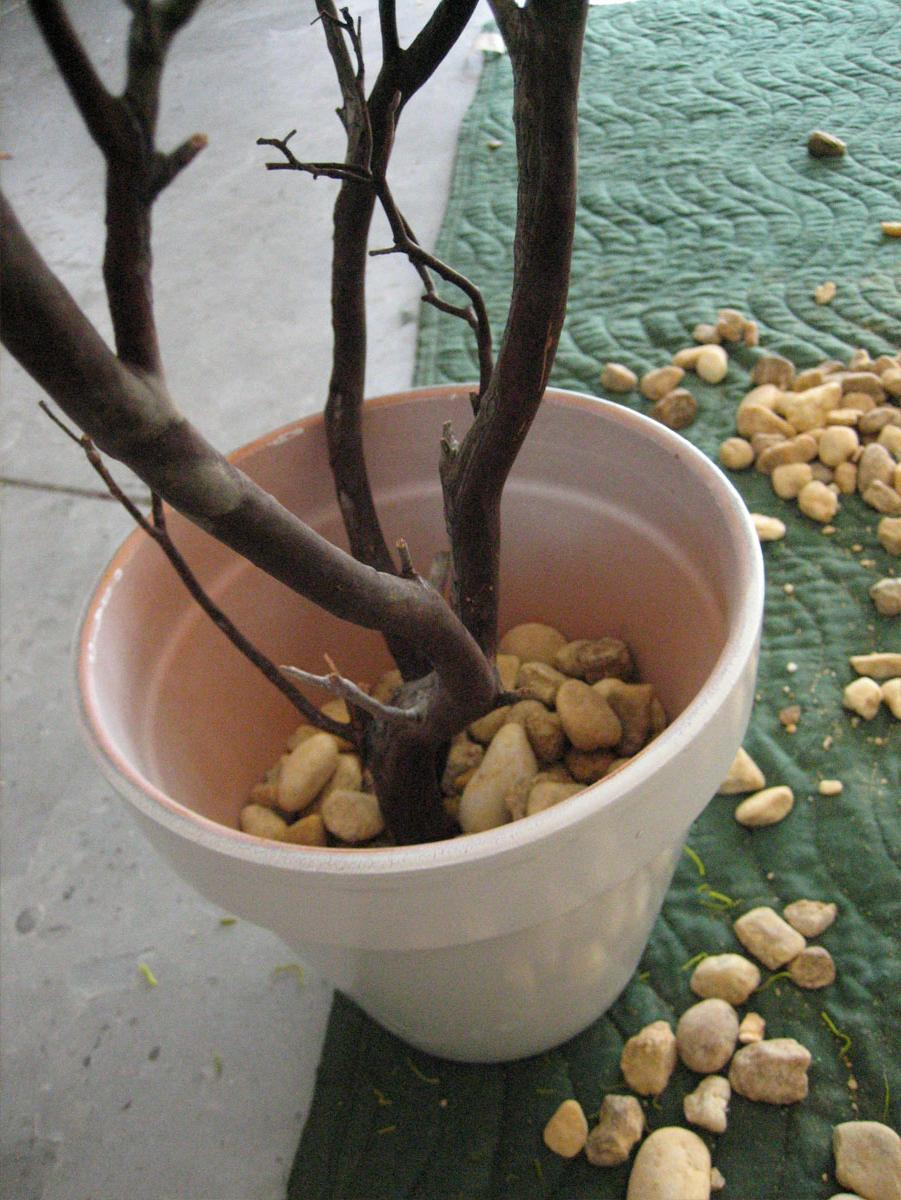 set the Manzanita branches