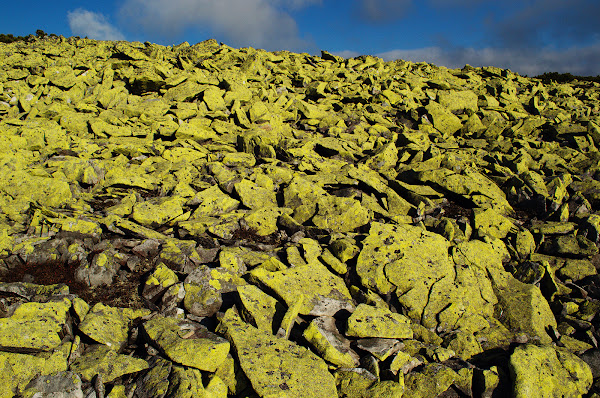 горганы камни желтые карпаты