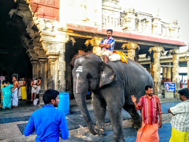 Temple Elephant at Tiruchendur Temple