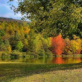 As Fall Begins by Karen Hardman - Nature Up Close Trees & Bushes