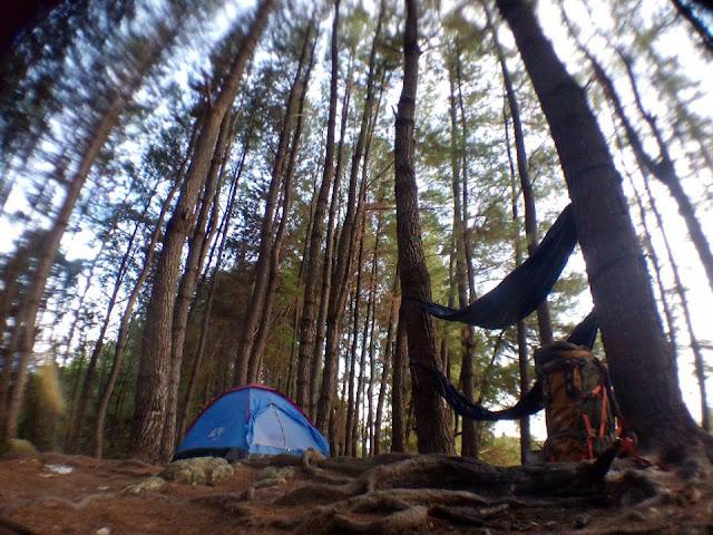 hutan pinus desa batu polman