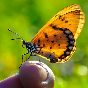 On My Finger by Ade Yuda - Animals Insects & Spiders