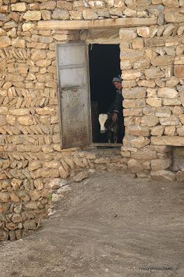 Pani od twardego sera i jej krowa :)