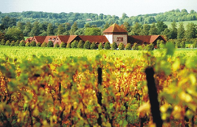 English wine production soared to a record 6.3 million bottles in 2015, buoyed by climate change. Pictured is Denbies vineyard, Surrey. Photo: Daily Mail