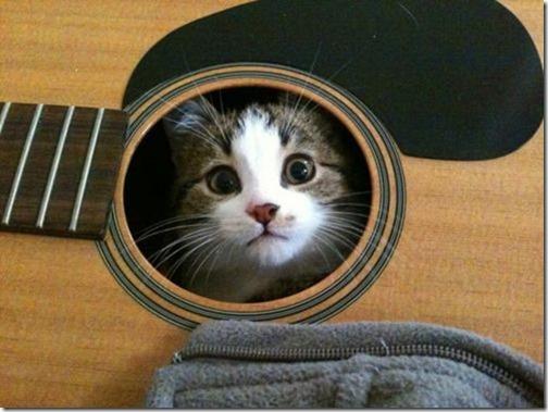 gatos sitios para esconderse (2)