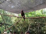A lorikeet at the Nashville Zoo 09032011a