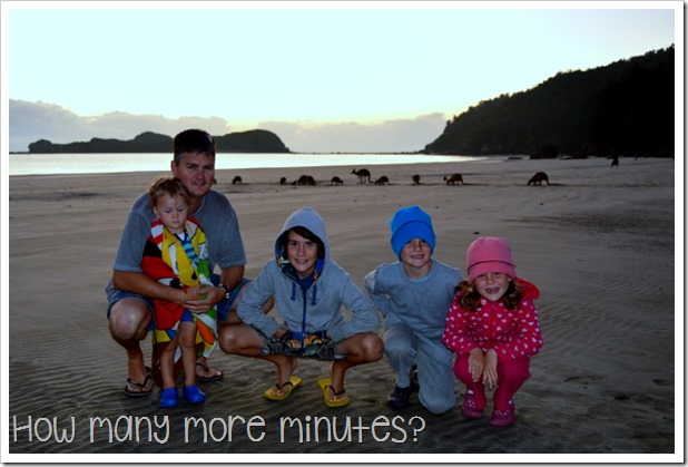 Sunrise With the Wallabies, Cape Hillsborough NP   How Many More Minutes?